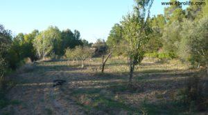Detalle de Masico en el rio Matarraña Mazaleón con frutales por 25.000€