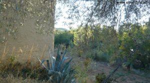 Masico en el rio Matarraña Mazaleón para vender con olivos