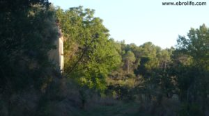 Foto de Masico en el rio Matarraña Mazaleón con higueras
