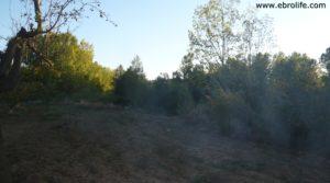 Masico en el rio Matarraña Mazaleón en oferta con frutales