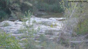 Foto de Masico en el rio Matarraña Mazaleón con olivos