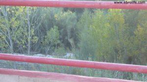 Se vende Masico en el rio Matarraña Mazaleón con olivos por 25.000€