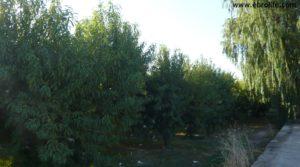 Terreno de huerta en Caspe a buen precio con frutales