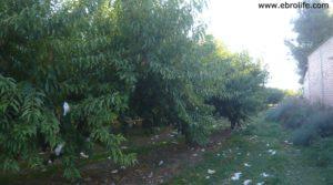 Foto de Terreno de huerta en Caspe en venta con huerta por 18.000€