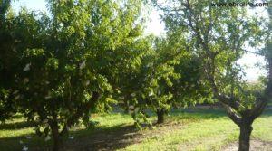 Terreno de huerta en Caspe en venta con electricidad por 18.000€