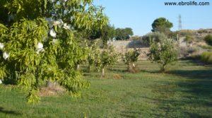 Foto de Terreno de huerta en Caspe con frutales por 18.000€