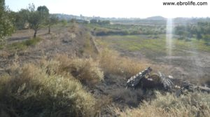 Terreno de huerta en Caspe a buen precio con electricidad