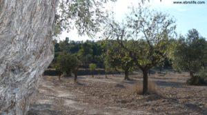 Foto de Cabaña en Nonaspe con almendros