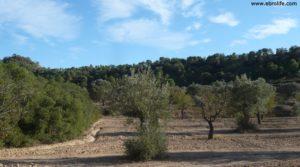 Vendemos Cabaña en Nonaspe con bosque por 9.000€
