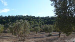 Vendemos Cabaña en Nonaspe con monte por 9.000€