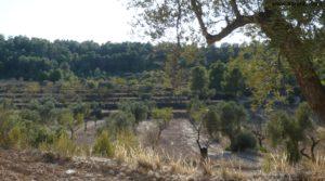 Cabaña en Nonaspe en oferta con almendros