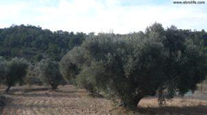 Olivar Con Masía en Maella en venta con viñas
