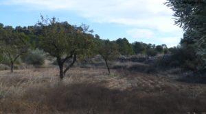 Olivar Con Masía en Maella para vender con olivos centenarios por 56.000€