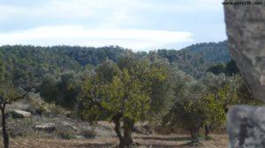 Foto de Olivar Con Masía en Maella con olivos centenarios por 56.000€