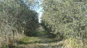 Soto en Caspe en venta con rio guadalope por 22.000€
