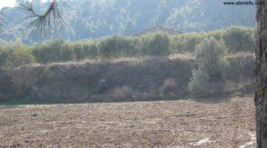 Soto en Caspe en venta con cereales por 22.000€