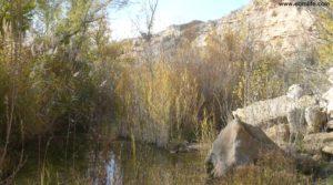 Soto en Caspe en venta con olivos por 22.000€