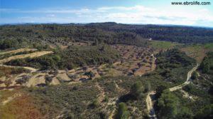 Se vende Finca en Calaceite con pinares