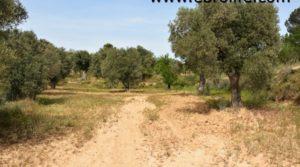 Vendemos Finca en Calaceite con olivos centenarios