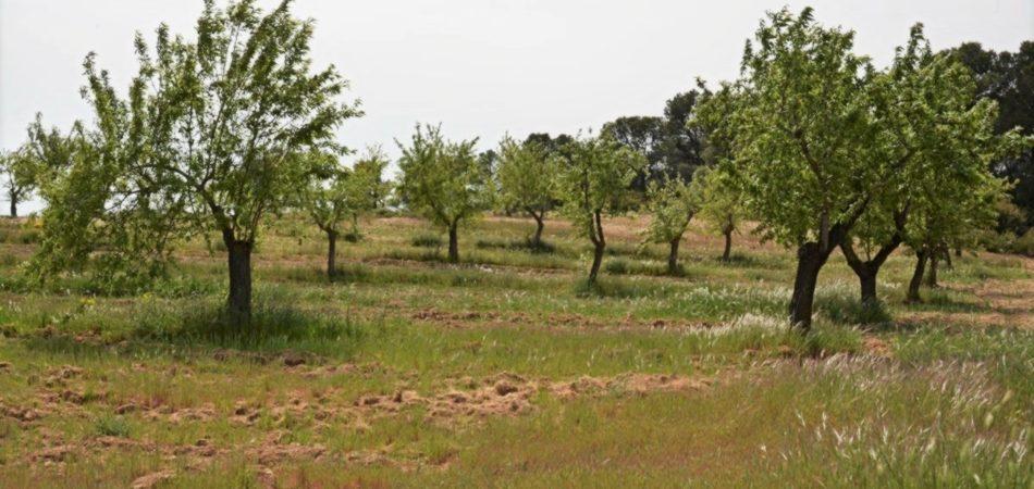 finca-calaceite-masia-pozo-olivos-6