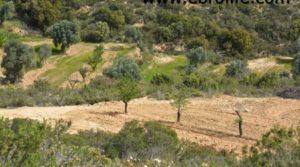 Se vende Finca en Calaceite con olivos centenarios por 86.000€