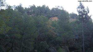 Foto de Finca trufera en Rafales con trufas por 95.000€