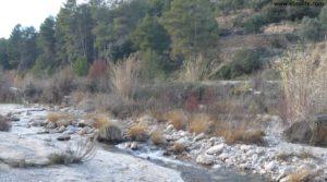 Olivar en el rio Tastavins en Fuenteespalda para vender con bosques