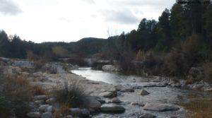 Detalle de Olivar en el rio Tastavins en Fuenteespalda con bosques por 105.000€