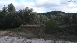 Detalle de Olivar en el rio Tastavins en Fuenteespalda con rio tastavins por 105.000€