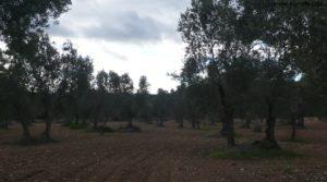 Vendemos Olivar en el rio Tastavins en Fuenteespalda con pozo de agua por 105.000€