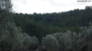 Olivar en el rio Tastavins en Fuenteespalda en oferta con rio tastavins por 105.000€