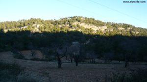 Detalle de Masía del horno Fuentespalda con bosques