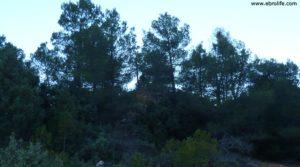Detalle de Masía del horno Fuentespalda con bosques por 160.000€