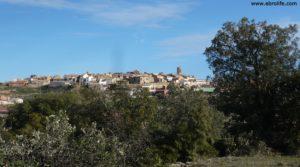 Olivar joven en Cretas en venta con olivos