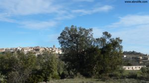 Detalle de Olivar joven en Cretas con olivos por 28.000€