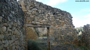 Vendemos Olivar joven en Cretas con olivos por 28.000€