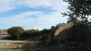 Olivar joven en Cretas a buen precio con masía