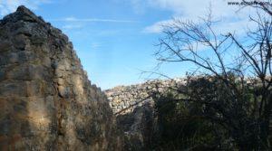 Foto de Olivar joven en Cretas con montaña
