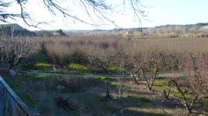 Gran casa de campo en Maella a buen precio con tranquilidad por 275.000€
