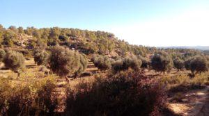 Olivar con casa de piedra en Maella. en oferta con tranquilidad