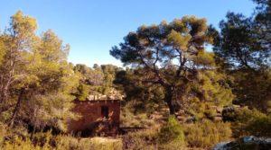 Olivar con casa de piedra en Maella. a buen precio con privacidad