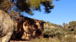Foto de Olivar con casa de piedra en Maella. con privacidad