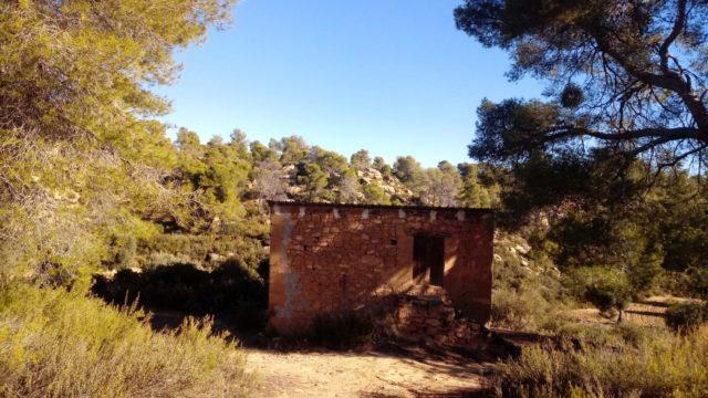 Olivar con casa de piedra en Maella.