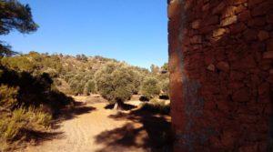 Foto de Olivar con casa de piedra en Maella. con tranquilidad