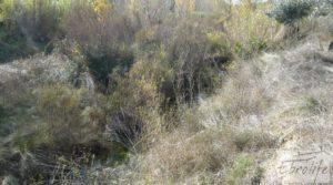 Casa en el río Tastavins, en La Portellada. a buen precio con regadío