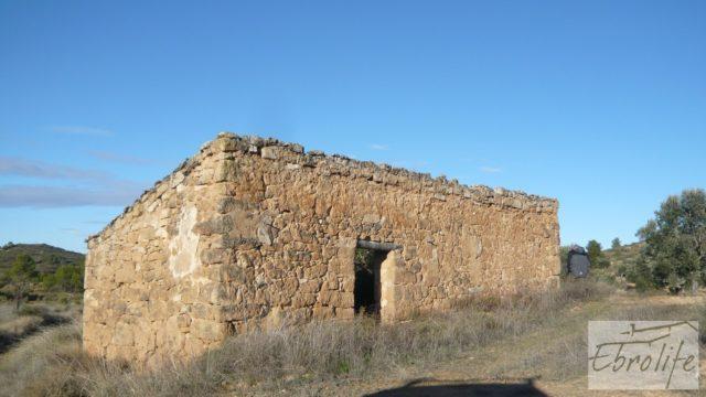 Olivar centenario en Maella.