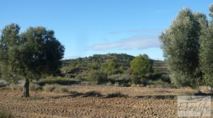 Vendemos Olivar centenario en Maella. con excelente acceso. por 16.000€