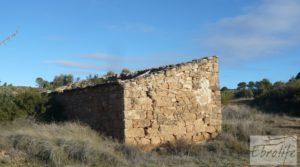 Olivar centenario en Maella. para vender con excelente acceso. por 16.000€