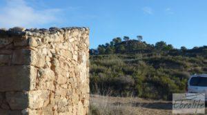 Olivar centenario en Maella. en venta con excelente acceso.