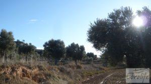 Detalle de Olivar centenario en Maella. con excelente acceso. por 16.000€